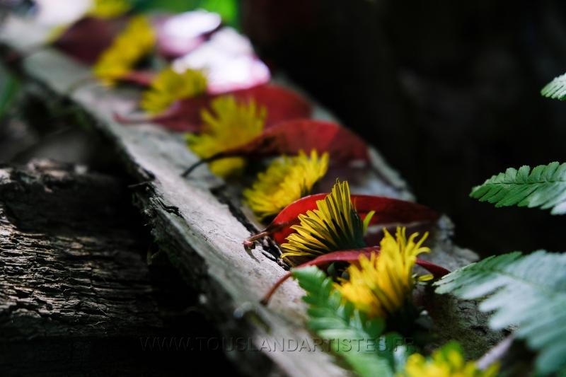 Land_Art_fleurs_Arbres09