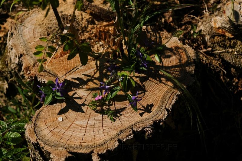 Land_Art_fleurs_Arbres14
