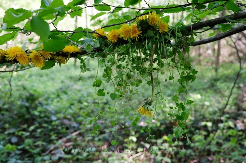 Land_Art_fleurs_Arbres18
