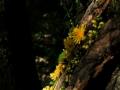 Land_Art_fleurs_Arbres05