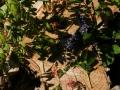 Land_Art_fleurs_Arbres15