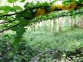 Land_Art_fleurs_Arbres19
