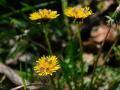 Land_Art_fleurs_Arbres21