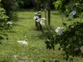 Jardin_BSA_Charbinat_07