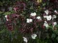 Jardin_BSA_Charbinat_11