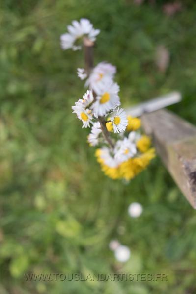 Verrieres_printemps_16
