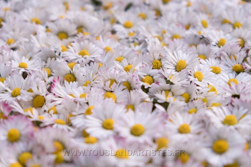 Verrieres_printemps_41