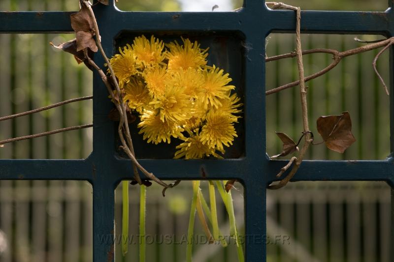 Verrieres_printemps_43