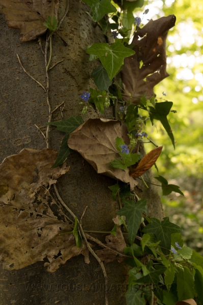 Verrieres_printemps_49