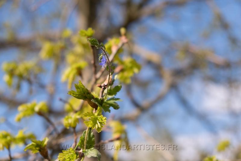 Verrieres_printemps_57