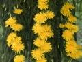 Verrieres_printemps_12