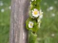 Verrieres_printemps_15