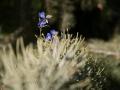 Verrieres_printemps_21