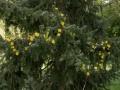 Verrieres_printemps_25