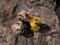Verrieres_printemps_32