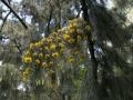 Verrieres_printemps_37