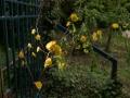 Verrieres_printemps_45