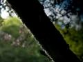 Verrieres_printemps_59